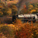 Gold, Best of Grade 1 - Autumn Train - Theo Pieters